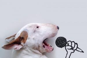 video-bull-terier-in-njegov-lastnik-skupaj-ustvarjata-zabavne-umetnine