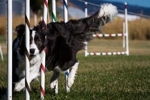 agility-aktivnost-ki-zblizuje-psa-in-cloveka
