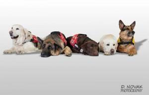 brez-psov-vodnikov-so-vse-ulice-slepe