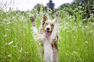 kako-na-naraven-nacin-zascitimo-psa-pred-bolhami
