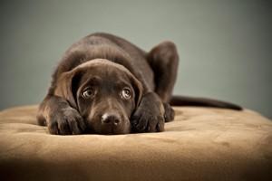zakaj-se-vas-pes-boji-neviht-in-kako-mu-lahko-pomagate