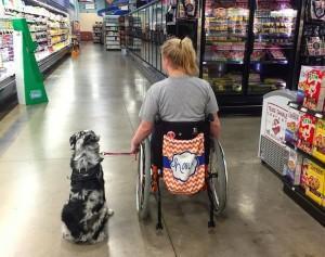 zakaj-ne-smete-nikoli-pobozati-psa-vodnika