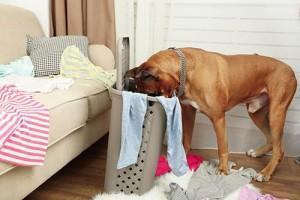 6-nasvetov-kako-vas-dom-napraviti-bolj-varen-za-psa-1