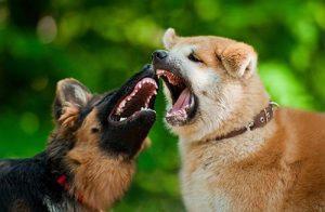 kaj-storiti-ce-je-nas-pes-napaden