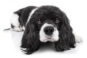 kako-lahko-svojemu-psu-pomagate-premagati-strah-in-tesnobo