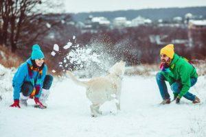 dobra-nega-in-pocutje-kuzkov-v-zimskem-casu