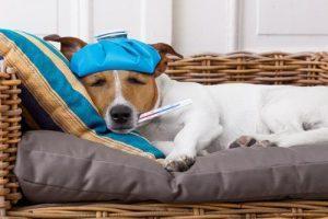 15-znakov-ki-nam-povedo-da-je-cas-za-obisk-pri-veterinarju