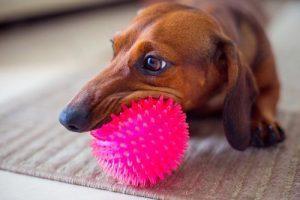 5-nasvetov-kako-zaposliti-psa-v-stanovanju