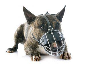 kaj-je-bsl-in-kako-vpliva-na-lastnike-psov
