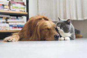 ali-lahko-pes-in-macka-zivita-skupaj-v-miru