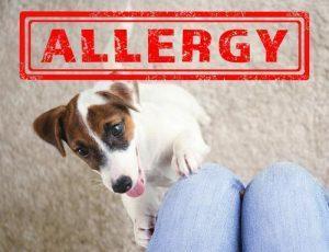 ali-so-alergiki-lahko-pasji-skrbniki