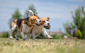 pasja-igra-in-zakaj-je-tako-pomembna