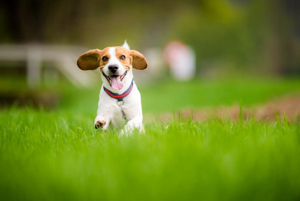 Obstajata dve vrsti hiperaktivnosti pri psih.