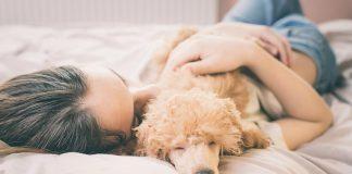 Pes, ki spi na postelji, lahko prenaša okužbe