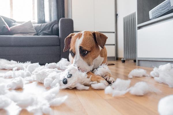 Pes uničuje igrače