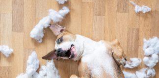 Uničevalno vedenje pri psu