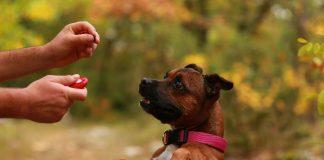 Kako psa naučiti trikov?