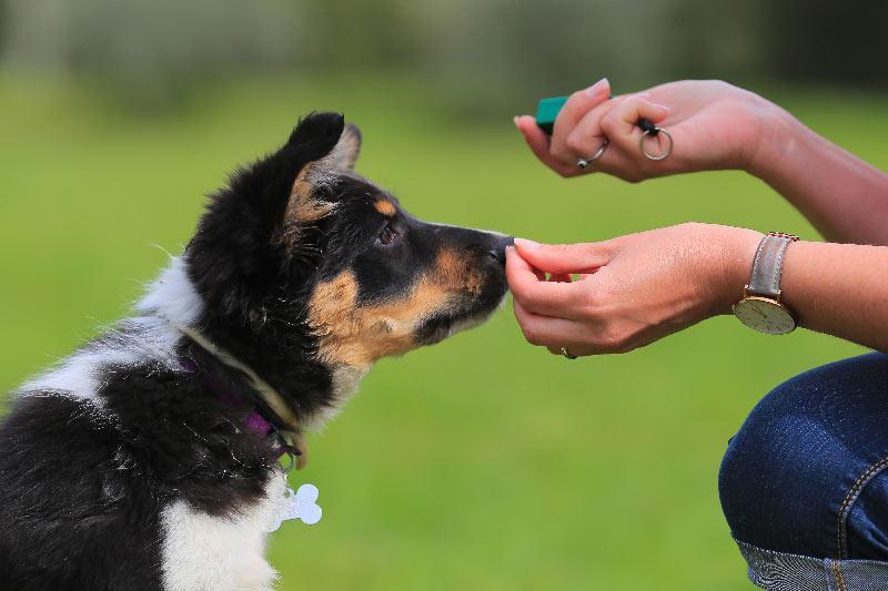 Učenje psa s klikerjem in pozitivno motivacijo