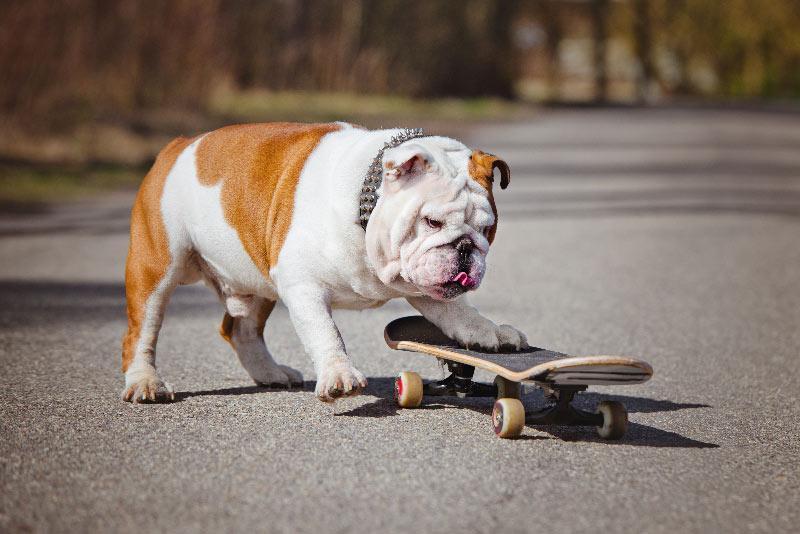 Kako psa naučiti trika rolkanje