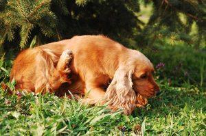 Pes lahko ima alergijo na katerokoli snov, s katero pride v stik. Tako je lahko alergen trava, plesen, cvetni prah in običajen prah.