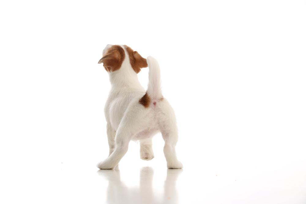Analne žleze so v preteklosti igrale ključno vlogo v življenju psov, ko so le ti še živeli v divjini. Izločki iz žlez so služili za označevanje teritorija, dandanes pa je funkcija le teh še vedno takšna, vendar pa ne predstavlja ključne življenjske funkcije kot v preteklosti. Dandanes kužki z izločkom označujejo svojo prisotnost na nekem območju za naslednje prihajajoče kužke