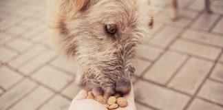 Pravilna in uravnotežena prehrana je pomembna v vsaki fazi življenja vašega psa. A vendar je še posebej smiselno upoštevati prehranske potrebe starejših psov. Ravno tako kot ljudje imajo lahko psi v starejših letih določene zdravstvene težave in povišana tveganja za razvoj raznih bolezni.
