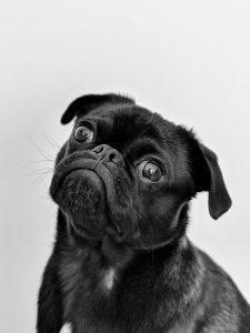 Obstaja več razlogov, zakaj psi hiperventilirajo. Tudi številne bolezni ali neželeni stranski učinki zdravil, lahko pri psu povzročijo stres, bolečino in vznemirjenje.