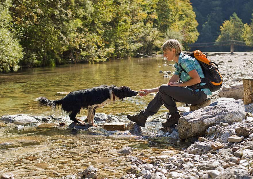 Igra s psom v vodi