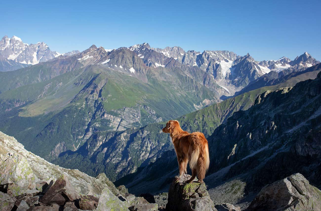 Pes na skali v hribih