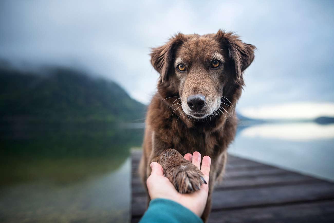 Pes daje tačko