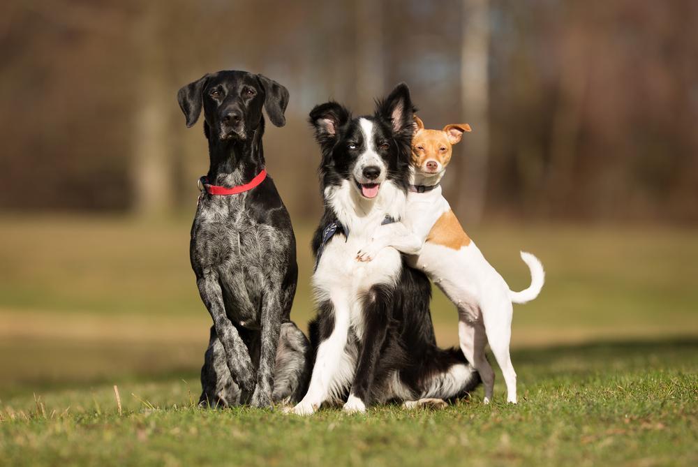 Če želite sebi in svojim kužkom omogočiti bolj kakovostno življenje, je pomembno, da upoštevate nekaj ključev, ki vodijo do srečnega pasjega doma.