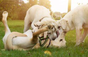 Če opazite, da v pasjem parku uživate le vi in ne vaš kuža, je čas, da razmislite o drugačnem načinu socializacije svojega kužka.