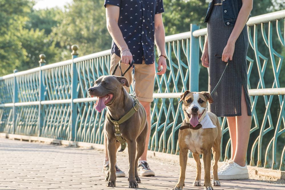 Ker so si kužki med seboj različni ravno tako, kot smo si ljudje, se lahko zgodi, da uporabljene tehnike socializacije niso primerne za vse pse. Morda pa ima kuža gensko nagnjenost k strahu in tesnobi.