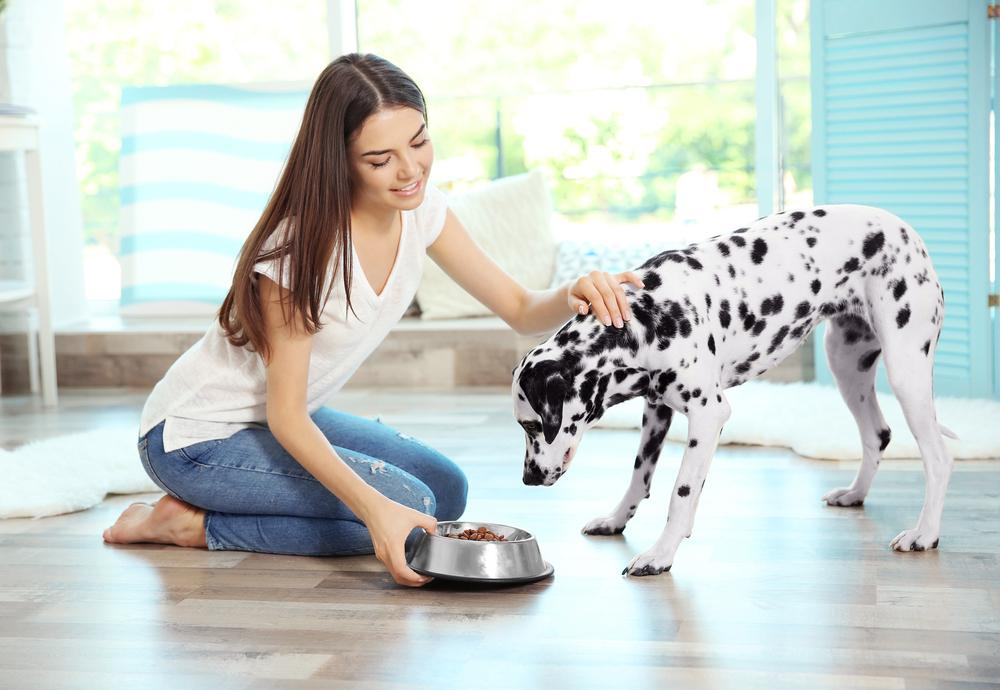 Nekateri kužki razvijejo prebavne težave, ker njihova hrana vsebuje preveč maščob ali ne vsebuje dovolj vlaknin. V nekaterih primerih pa lahko prebavne težave kažejo na prisotnost nekaterih zdravstvenih motenj.