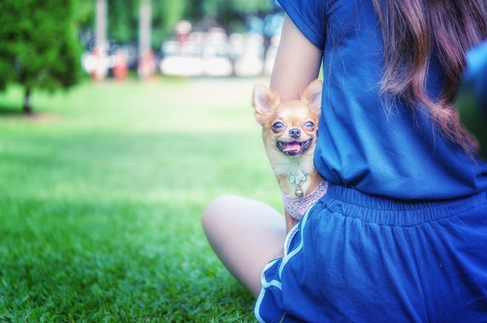 Na splošno je znano, da so psi odlična tolažba v težkih časih in prijetna družba, ko se želimo odmakniti od ponorelega sveta.