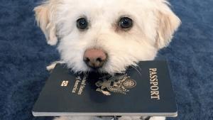 Pomembno je, da se najprej pozanimate, kakšna pravila ima država, v kateri dopustujete, glede izvoza živali. V nekaterih državah delujejo organizacije, ki vam lahko pomagajo pri organizaciji selitev. Te organizacije vas vodijo skozi postopek selitve iz države.