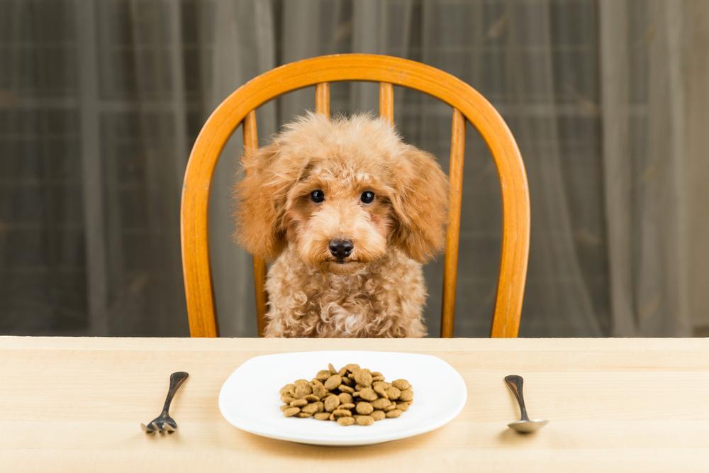 Škrob ali ogljikovi hidrati so pomemben del postopka ekstrudiranja. Večina suhe pasje hrane vsebuje najmanj 30 % škroba. Nekatere celo do 60 % škroba.