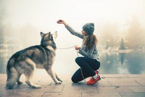 Vaš pes bo pozimi pri aktivnostih porabil več kalorij kot v toplejših delih leta.