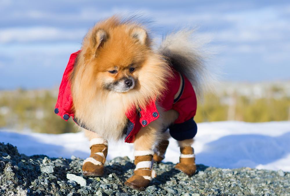 Če je vaš štirinožni prijatelj bolj zmrzljive sorte, potem smo za vas izbrskali nekaj pripomočkov, ki bodo njemu in vam olajšali mrzle zimske sprehode.
