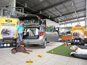 Vsak kuža na svoj način doživlja vožnjo v avtomobilu. Medtem ko se nekateri počutijo odlično, drugim vožnja predstavlja velik stres. Pomembno je, da lastniki poskrbite za varen prevoz svojih kužkov.