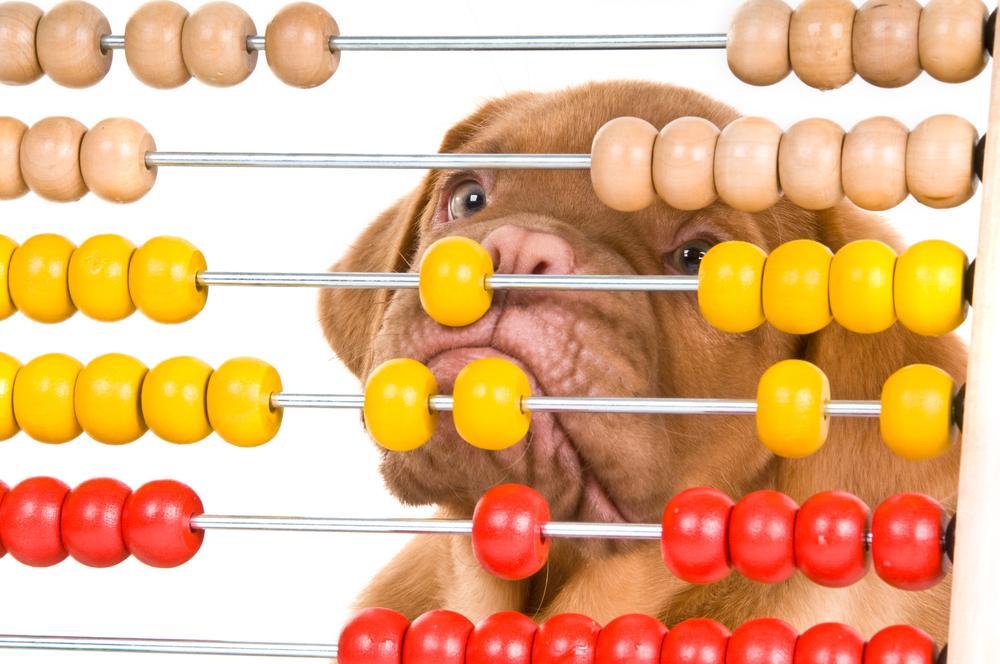 Na splošno študije s tega področja odkrivajo, da psi ne štejejo na enak način kot ljudje. Vendar so psi vseeno popolnoma uglašeni s številkami.