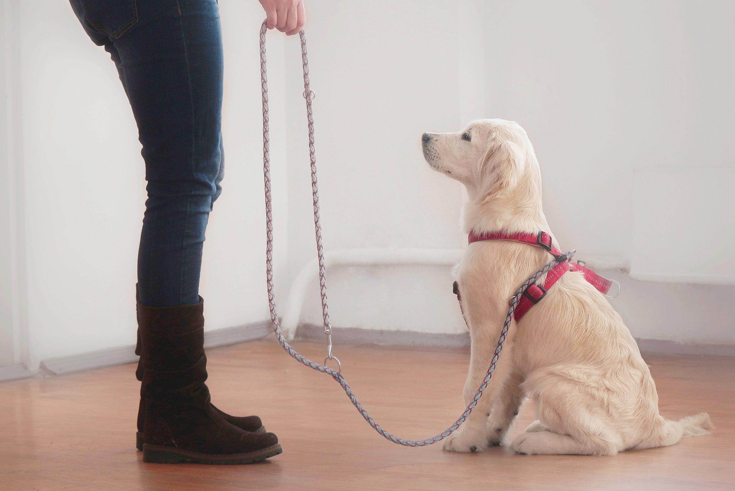 pes na povodcu sedi pred človekom