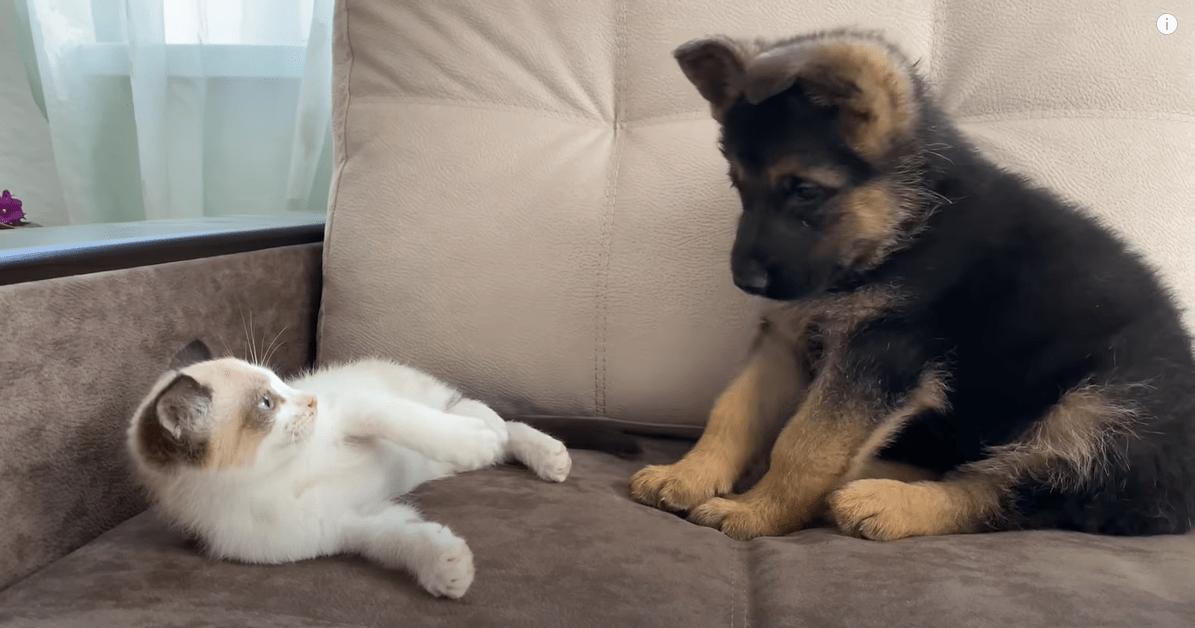 pes in mačka se igrata